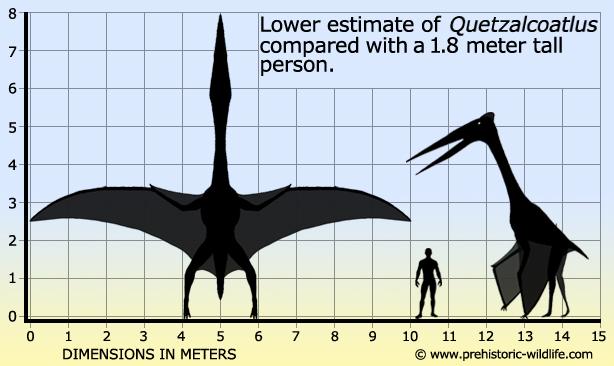 http://www.prehistoric-wildlife.com/images/species/q/quetzalcoatlus-size.jpg